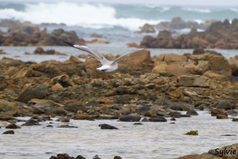 roseate tern hiking trail12